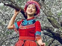 Mùa hoa mận nở trắng trời ở Mộc Châu