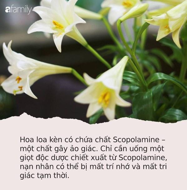 Cận Tết, điểm danh lại những loại hoa đẹp rực rỡ nhưng phải hết sức thận trọng vì có thể khiến mất trí nhớ thậm chí gây chết người rất nhanh-1