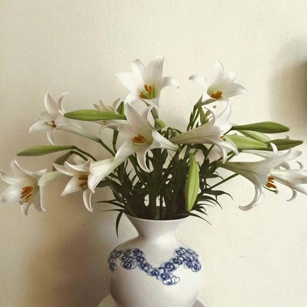 Cận Tết, điểm danh lại những loại hoa đẹp rực rỡ nhưng phải hết sức thận trọng vì có thể khiến mất trí nhớ thậm chí gây chết người rất nhanh-2