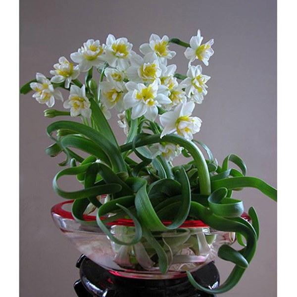Cận Tết, điểm danh lại những loại hoa đẹp rực rỡ nhưng phải hết sức thận trọng vì có thể khiến mất trí nhớ thậm chí gây chết người rất nhanh-4