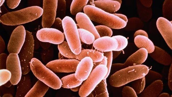 Thai phụ 27 tuổi mất con chỉ vì một miếng dưa hấu trong tủ lạnh, cảnh báo loại vi khuẩn nguy hiểm-3