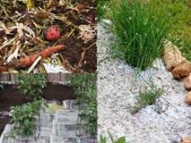 Mang giấy vụn rải khắp vườn, tác dụng bất ngờ ai cũng muốn học theo