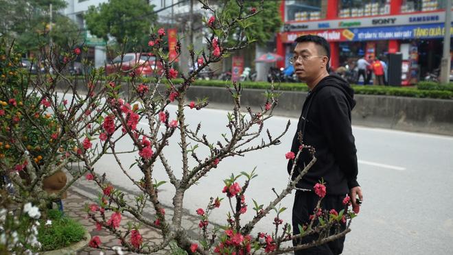 Dân buôn nhấp nhổm sợ mất Tết vì đào cảnh nở gần hết hoa, dài cổ chờ khách-10