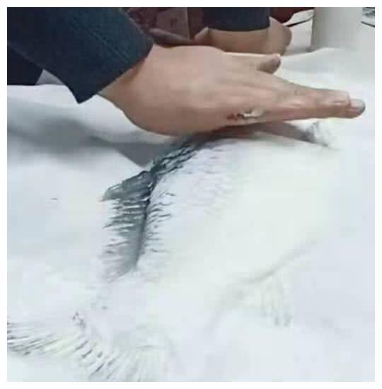 Đi học mẫu giáo có bài tập vẽ cá, cậu bé cùng ông nội làm ra tác phẩm bằng cách bá đạo khiến cô giáo trầm trồ-1