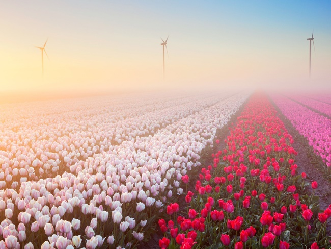 Chiêm ngưỡng những vườn hoa xuân đẹp nhất thế giới-1