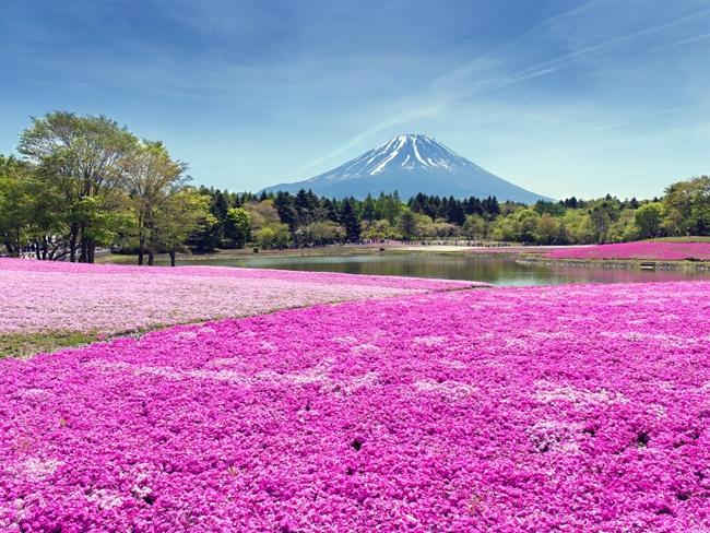 Chiêm ngưỡng những vườn hoa xuân đẹp nhất thế giới-2