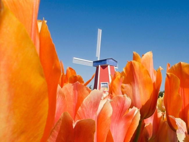 Chiêm ngưỡng những vườn hoa xuân đẹp nhất thế giới-4