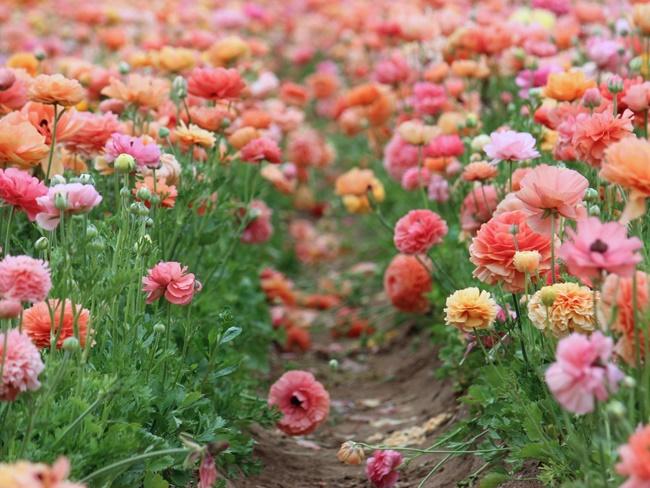 Chiêm ngưỡng những vườn hoa xuân đẹp nhất thế giới-10