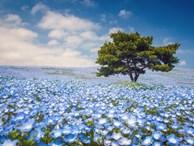 Chiêm ngưỡng những vườn hoa xuân đẹp nhất thế giới