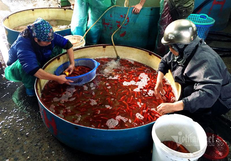 Chợ Hà Nội, khắp nơi đỏ rực một màu cá chép-3