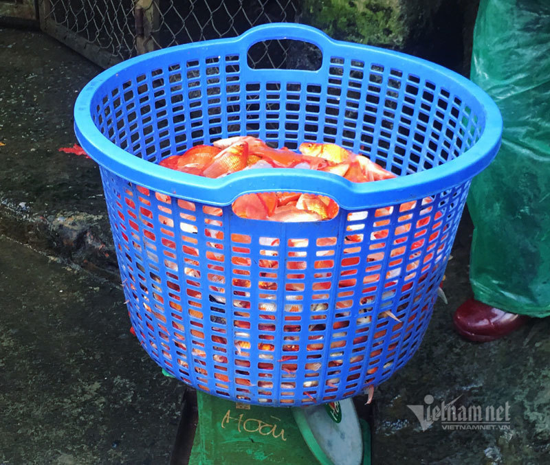 Chợ Hà Nội, khắp nơi đỏ rực một màu cá chép-8