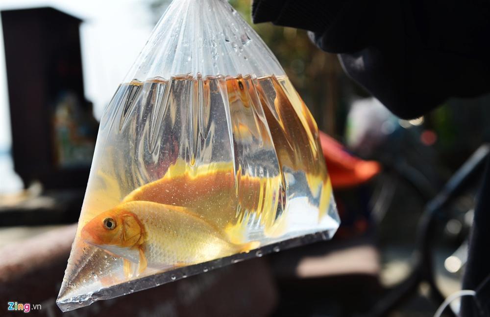 Thả cá, phóng sinh ồ ạt dịp lễ Tết - tạo phúc hay gây tội?-1