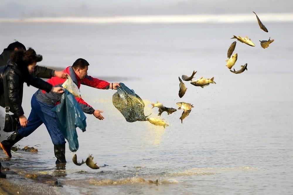 Thả cá, phóng sinh ồ ạt dịp lễ Tết - tạo phúc hay gây tội?-2