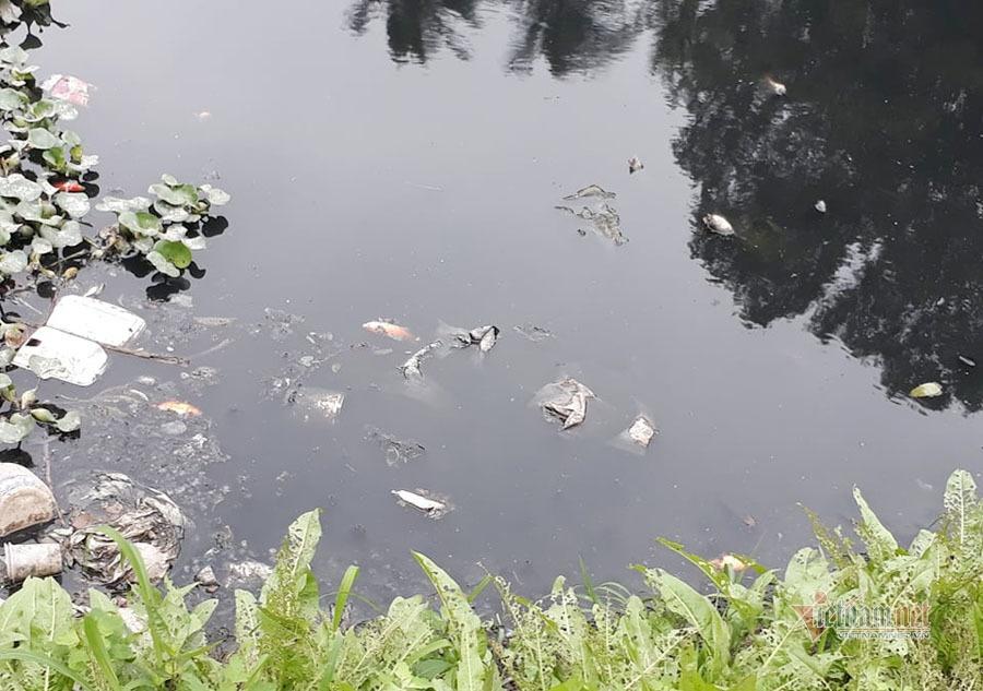 Nước sông đen kịt, bốc mùi, người Hà Nội vẫn đua nhau thả cá-10
