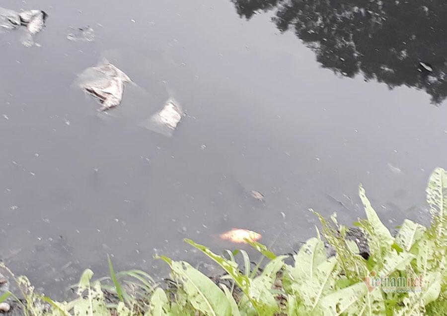 Nước sông đen kịt, bốc mùi, người Hà Nội vẫn đua nhau thả cá-11
