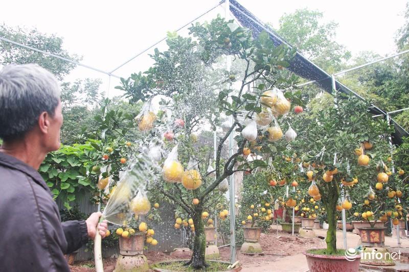 Vườn cây ghép 10 loại quả tiền tỷ, độc nhất vô nhị chỉ phục vụ chơi Tết-1