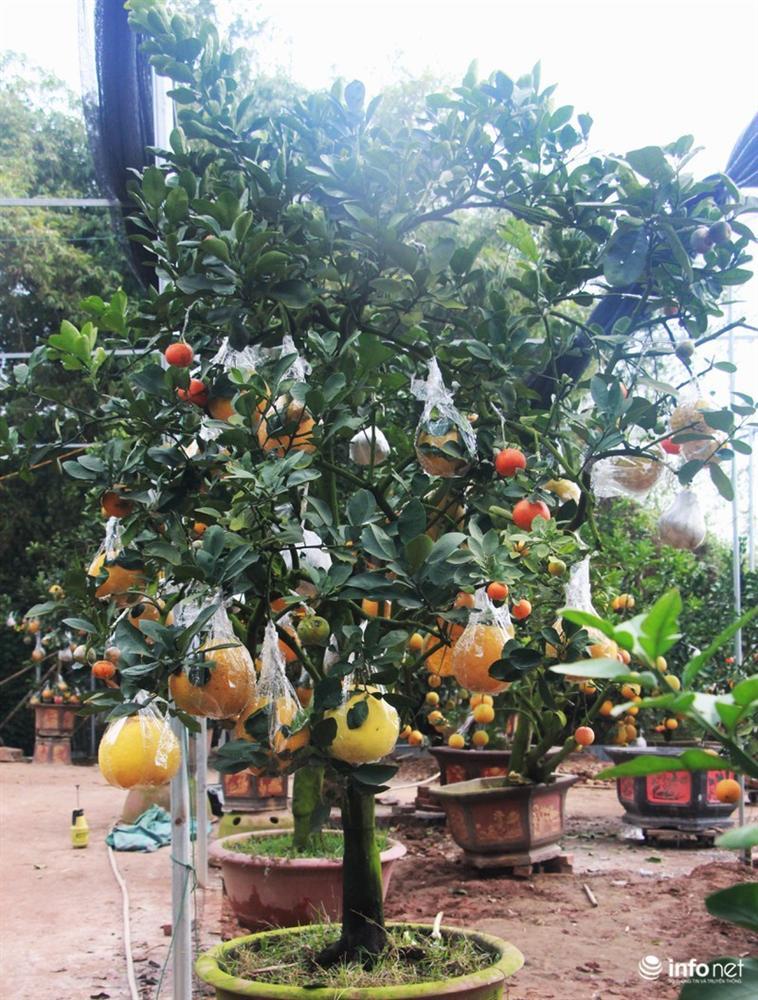 Vườn cây ghép 10 loại quả tiền tỷ, độc nhất vô nhị chỉ phục vụ chơi Tết-13