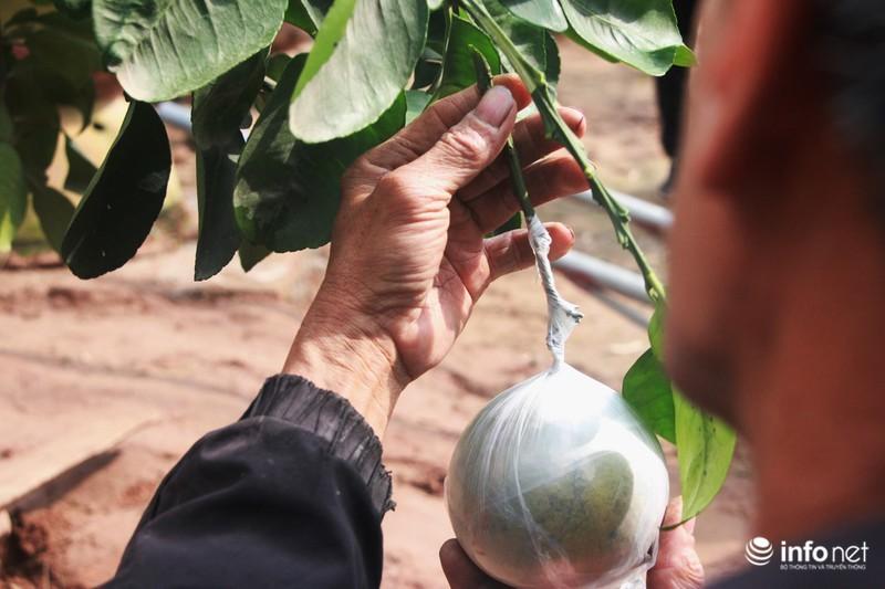 Vườn cây ghép 10 loại quả tiền tỷ, độc nhất vô nhị chỉ phục vụ chơi Tết-4