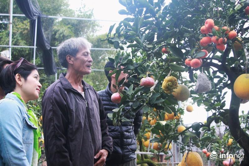 Vườn cây ghép 10 loại quả tiền tỷ, độc nhất vô nhị chỉ phục vụ chơi Tết-7
