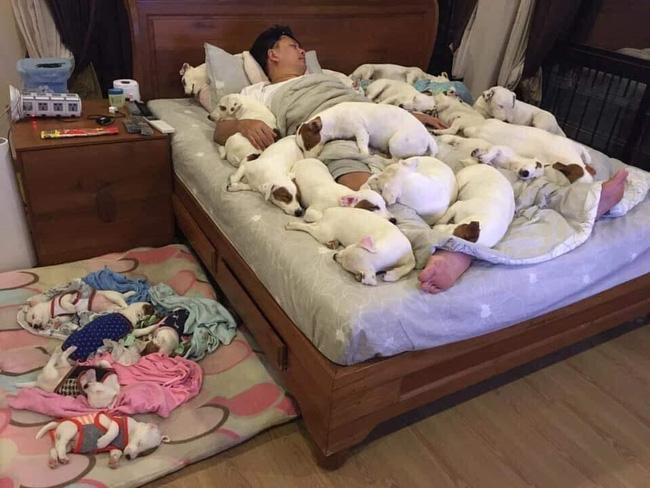 Anh chồng kêu khổ vì vợ cứ nằng nặc đòi nuôi 2 con chó, 3 năm sau kết cục xảy đến với anh khiến ai nấy câm nín-1
