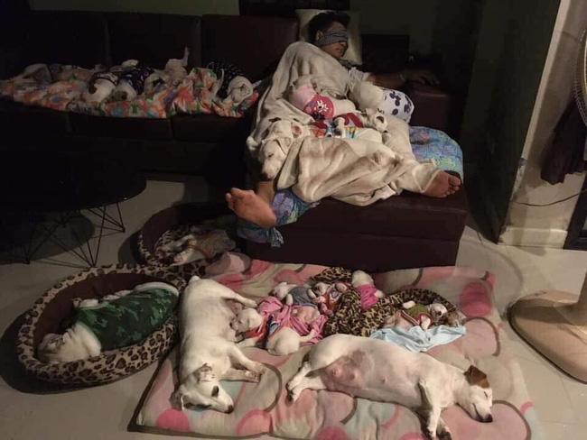 Anh chồng kêu khổ vì vợ cứ nằng nặc đòi nuôi 2 con chó, 3 năm sau kết cục xảy đến với anh khiến ai nấy câm nín-5