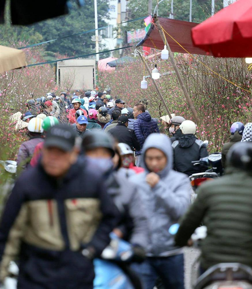 Tuần cuối trước Tết chợ hoa Quảng An đông nghẹt thở, người người đến sắm đào quất-1