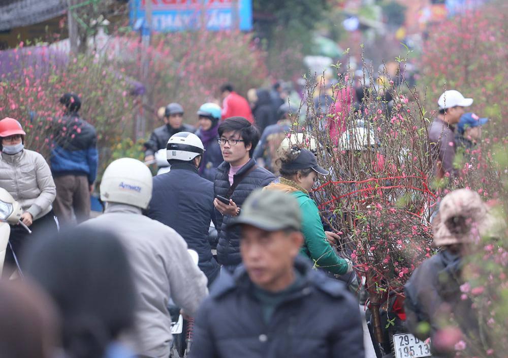 Tuần cuối trước Tết chợ hoa Quảng An đông nghẹt thở, người người đến sắm đào quất-2
