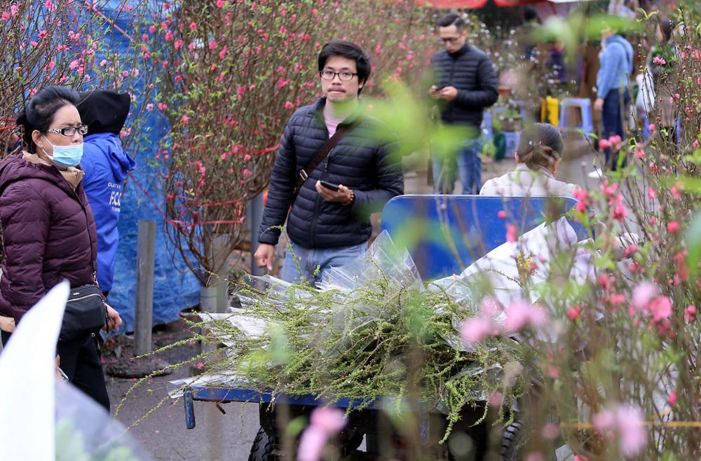 Tuần cuối trước Tết chợ hoa Quảng An đông nghẹt thở, người người đến sắm đào quất-3