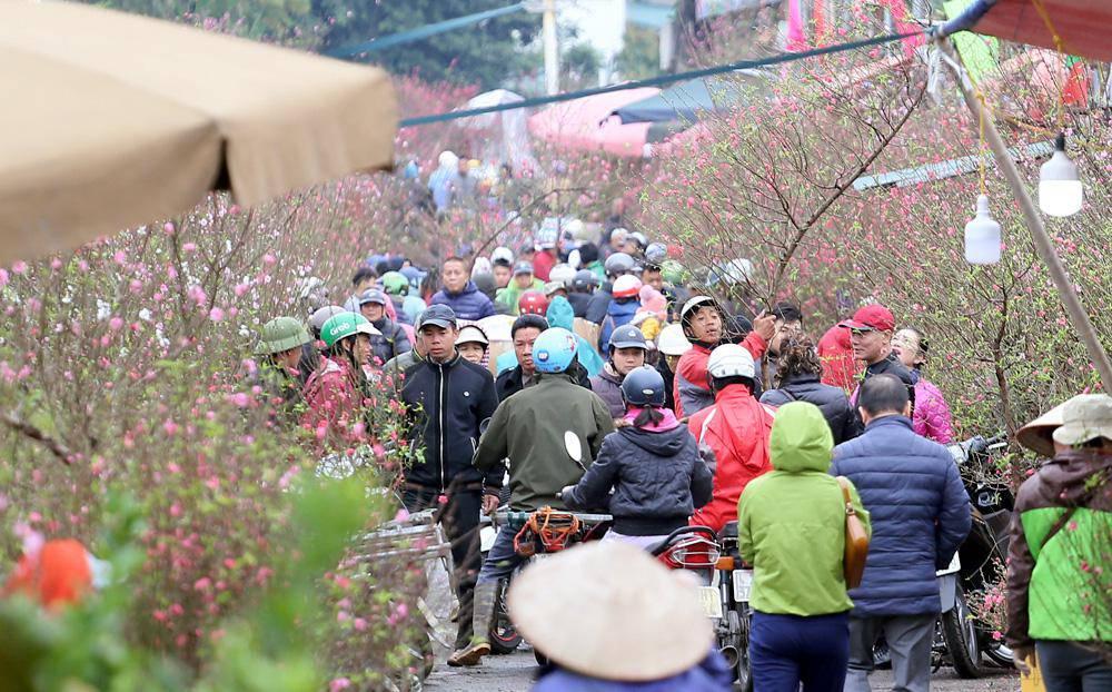 Tuần cuối trước Tết chợ hoa Quảng An đông nghẹt thở, người người đến sắm đào quất-5
