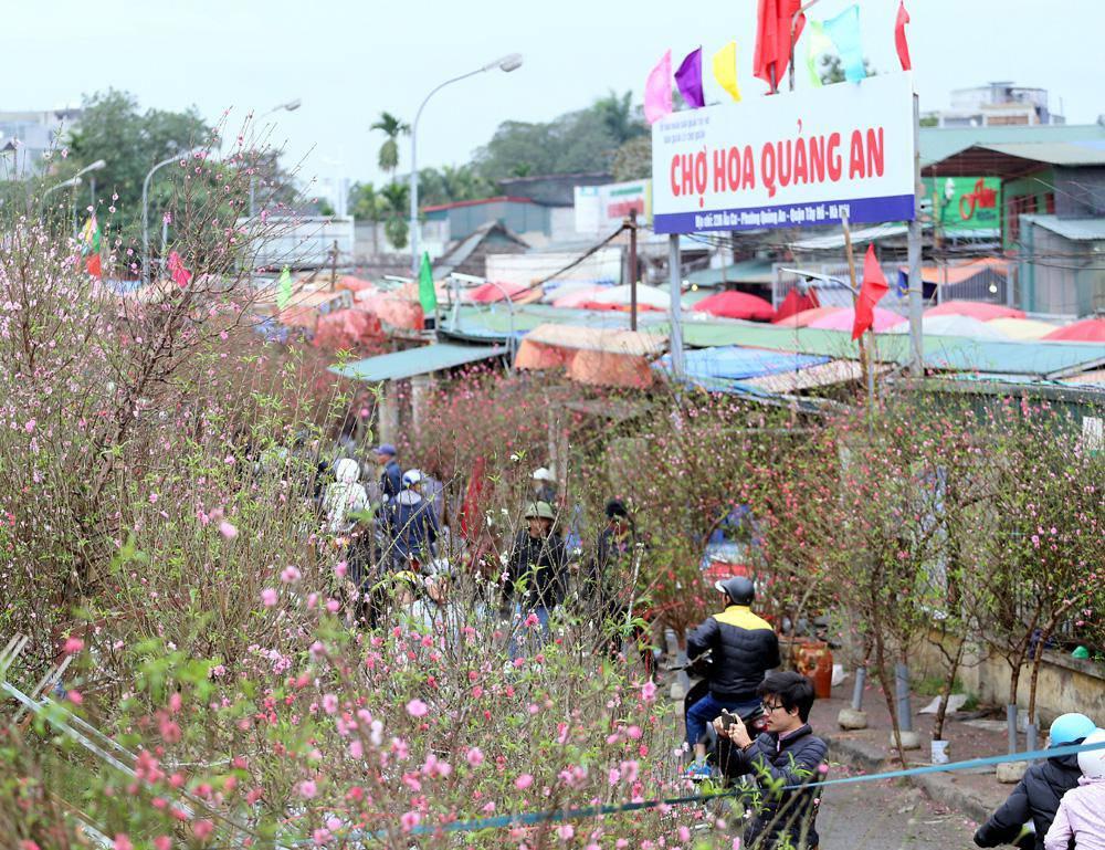 Tuần cuối trước Tết chợ hoa Quảng An đông nghẹt thở, người người đến sắm đào quất-10