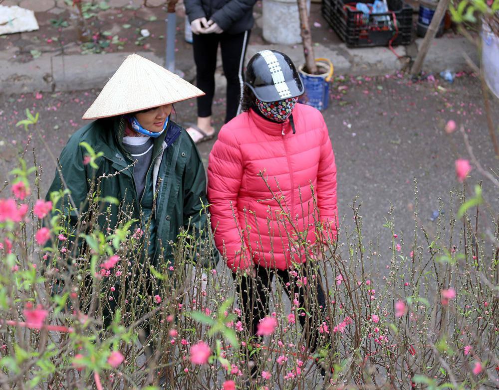 Tuần cuối trước Tết chợ hoa Quảng An đông nghẹt thở, người người đến sắm đào quất-11