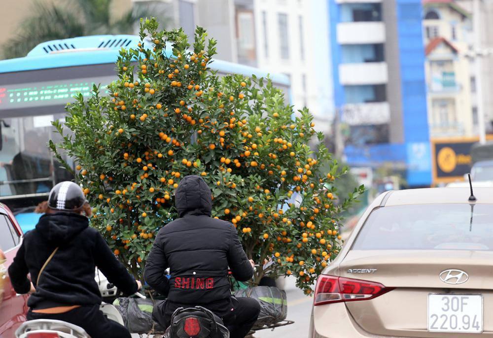Tuần cuối trước Tết chợ hoa Quảng An đông nghẹt thở, người người đến sắm đào quất-14