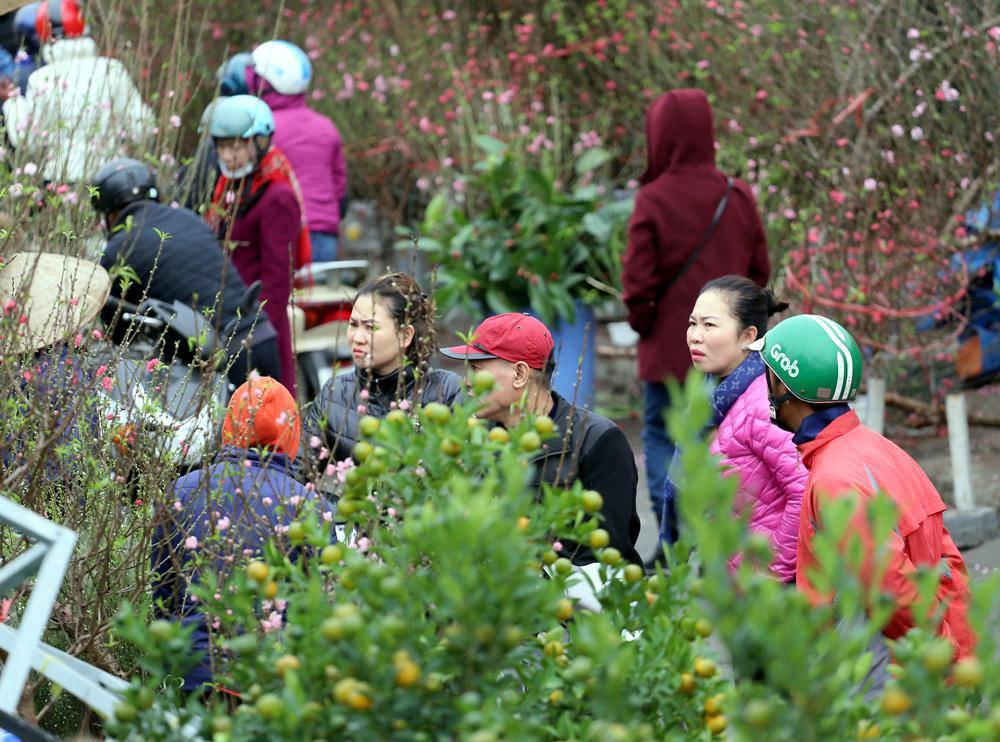 Tuần cuối trước Tết chợ hoa Quảng An đông nghẹt thở, người người đến sắm đào quất-7