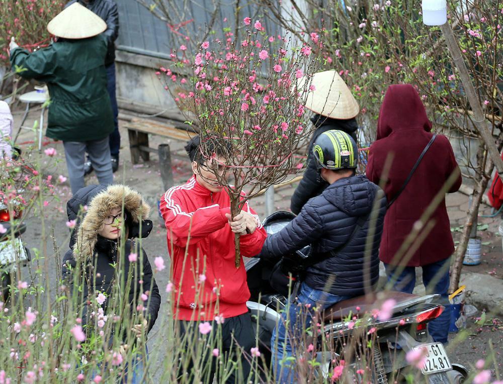 Tuần cuối trước Tết chợ hoa Quảng An đông nghẹt thở, người người đến sắm đào quất-9