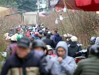 Tuần cuối trước Tết chợ hoa Quảng An đông 'nghẹt thở', người người đến sắm đào quất
