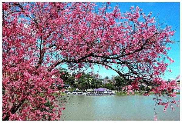 5 địa điểm du lịch trong nước lý tưởng cho dịp Tết Nguyên đán 2020-4