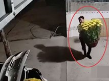 CLIP: Chủ nhà sốc nặng khi mua 4 chậu cúc đẹp vài triệu đồng chưa kịp chưng Tết đã bị kẻ gian đi ô tô bê mất 2 chậu trong đêm