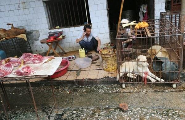 Bên trong khu chợ bùng phát virus corona tại Vũ Hán-2