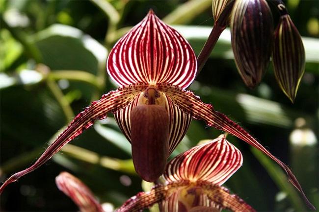 Loại hoa cực hiếm, 5 năm mới nở, gần 5 tỷ/cây, đại gia cũng khó mua-10