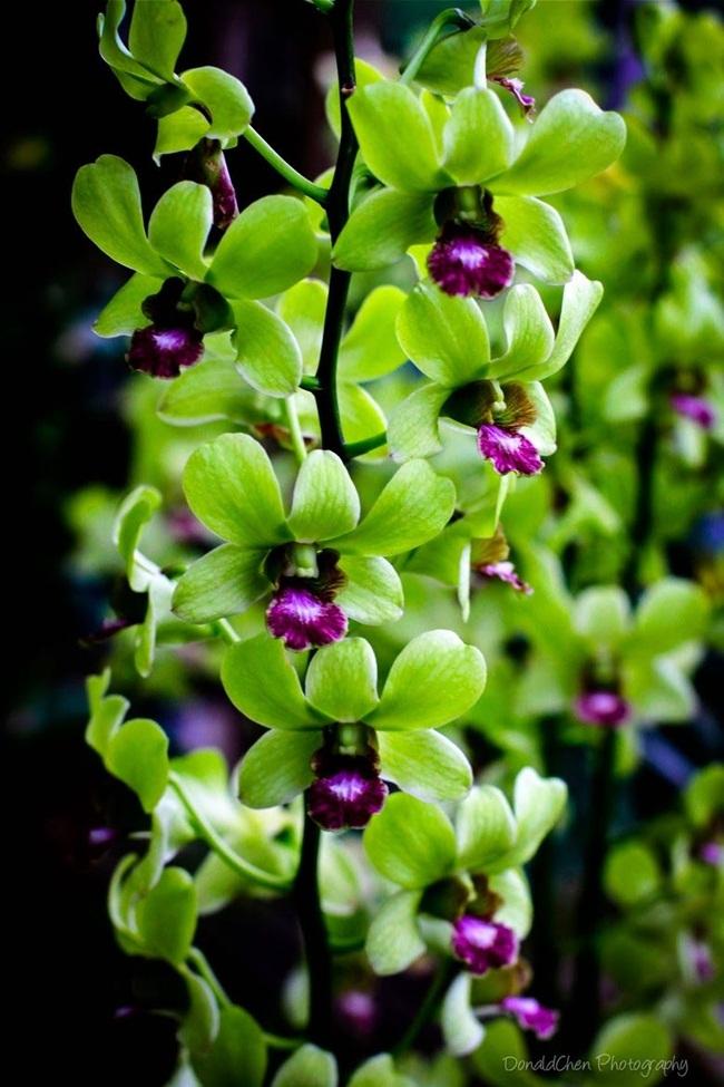Loại hoa cực hiếm, 5 năm mới nở, gần 5 tỷ/cây, đại gia cũng khó mua-2