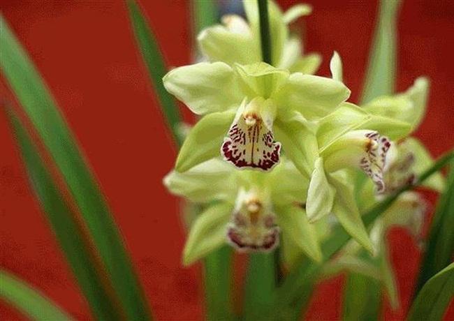 Loại hoa cực hiếm, 5 năm mới nở, gần 5 tỷ/cây, đại gia cũng khó mua-3