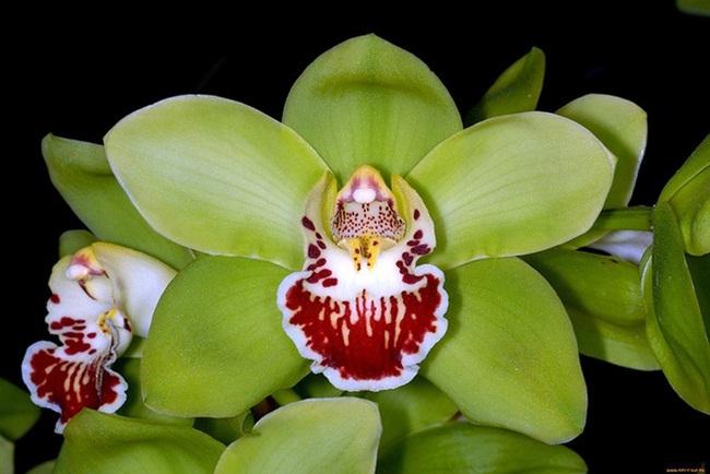Loại hoa cực hiếm, 5 năm mới nở, gần 5 tỷ/cây, đại gia cũng khó mua-4