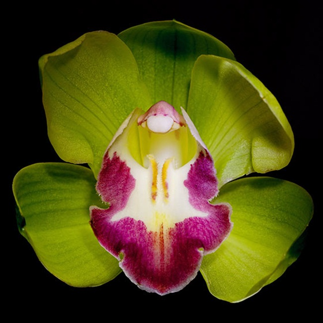 Loại hoa cực hiếm, 5 năm mới nở, gần 5 tỷ/cây, đại gia cũng khó mua-6