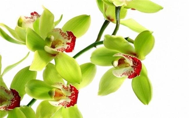Loại hoa cực hiếm, 5 năm mới nở, gần 5 tỷ/cây, đại gia cũng khó mua-7