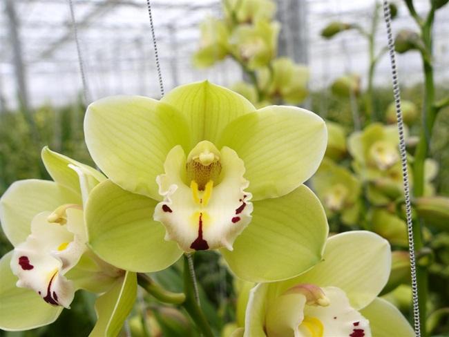Loại hoa cực hiếm, 5 năm mới nở, gần 5 tỷ/cây, đại gia cũng khó mua-8