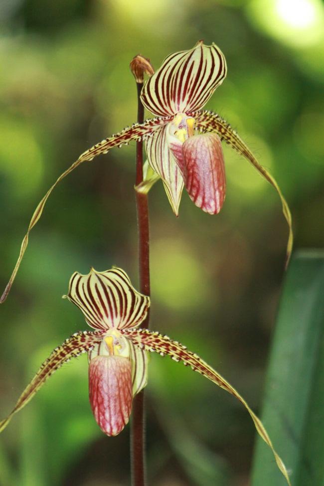 Loại hoa cực hiếm, 5 năm mới nở, gần 5 tỷ/cây, đại gia cũng khó mua-9