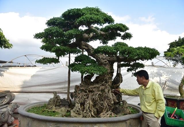Khách trả 1 triệu USD đổi lấy cây sanh cổ, chủ nhân quyết không bán-1