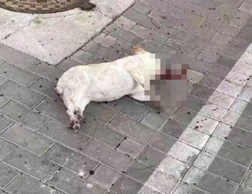 Nhiều chó, mèo ở Trung Quốc chết thảm do tin đồn virus corona có thể lây truyền qua vật nuôi-1