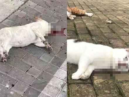 Nhiều chó, mèo ở Trung Quốc chết thảm do tin đồn virus corona có thể lây truyền qua vật nuôi