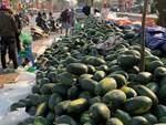 Trung Quốc ngừng mua ăn, giá mít giảm còn 5 ngàn/kg vẫn ế-3